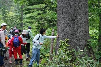 びっきの木.JPG